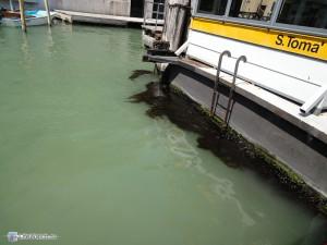 Вода и водросли около остановки s.toma