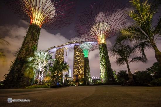 Супер-деревья ночью